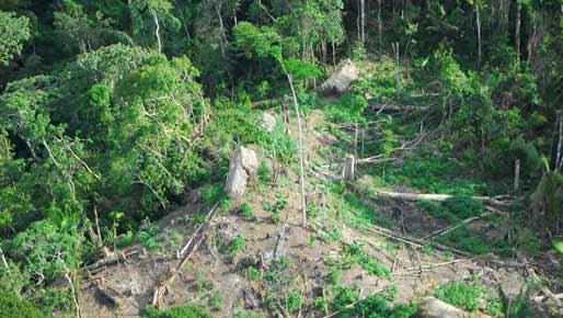 Resultado de imagem para comunidades indighenas isoladas no brasil - awá